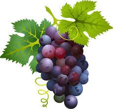 grappe-de-raisins